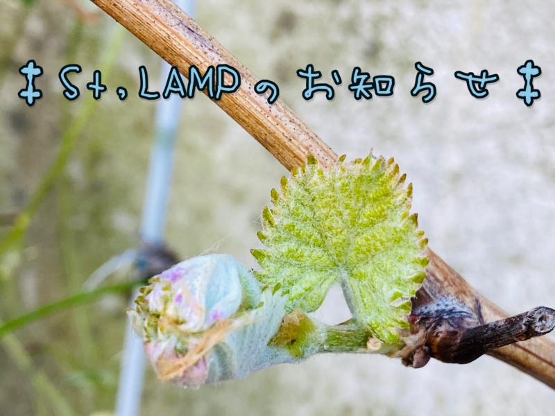 St,LAMP* のお知らせ